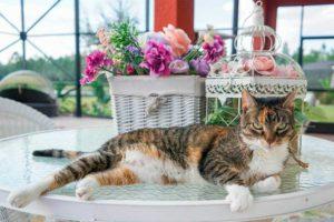 Безопасные-комнатные-растения-для-кошек