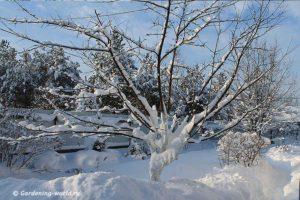 8 правил, как сажать семена под зиму