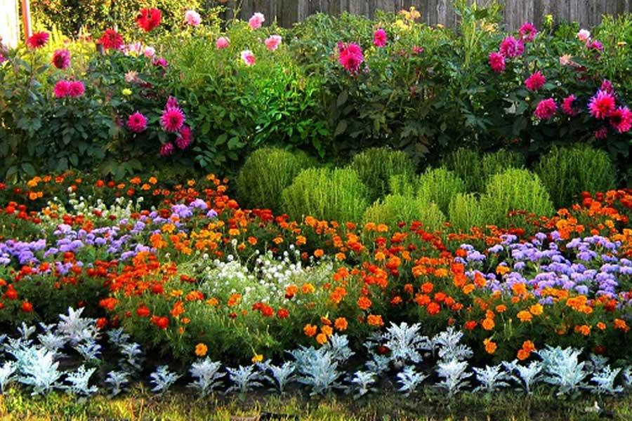 Какие цветы посадить под зиму, 20 однолетников