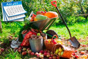 План работ садовода и огородника на август