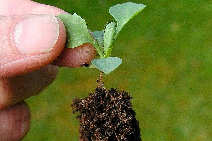 Как сажать семена на рассаду - 10 золотых правил