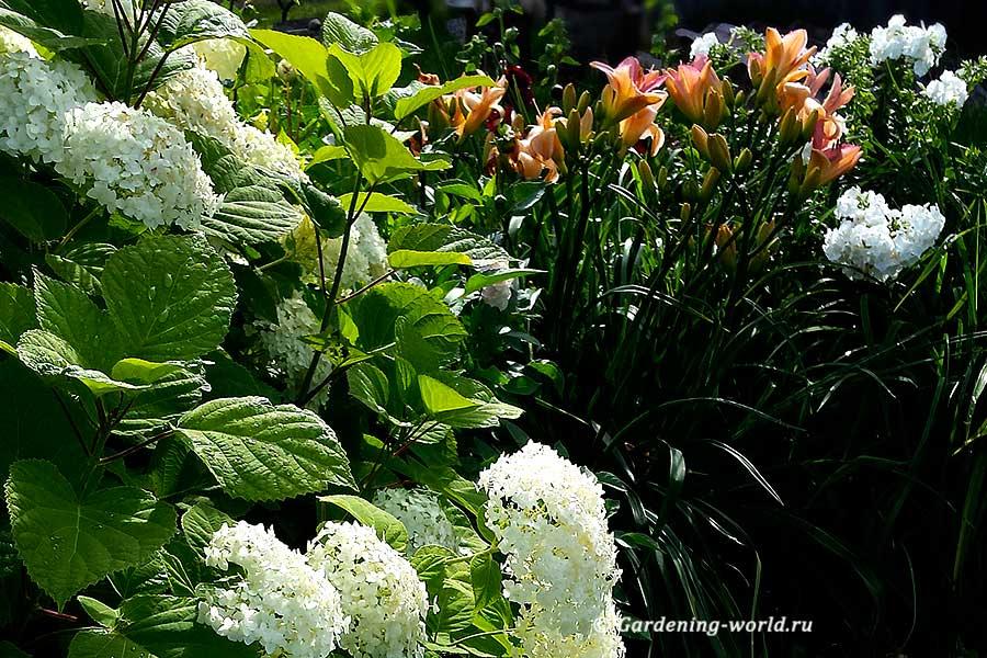 Многолетники для цветников