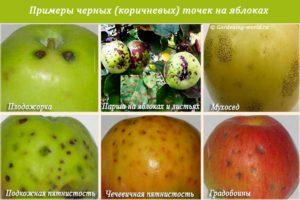 Черные точки на яблоках