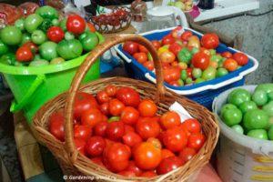 Как вырастить помидоры, простой способ, фото