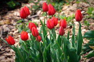 План работ садовода и огородника на апрель