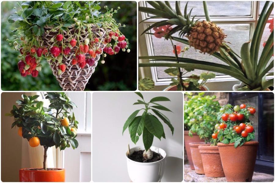 Выращивание ягод и фруктов из семян