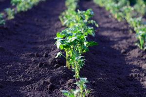 Выращиваем ранние овощи