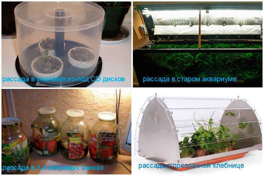 Выбираем емкости для посадки семян