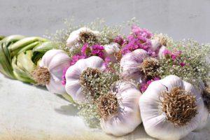 Польза чеснока в онкологии, что важно знать