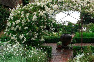 Примеры ландшафтного дизайна на даче, Белый сад