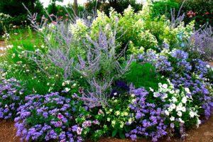 Синий цветник - цветник надежды