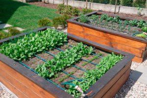 Система автополива растений, мастер-классы, видео