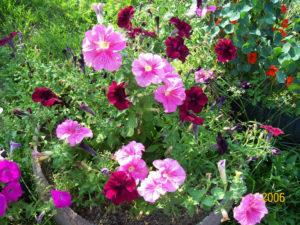 Фотоальбом - фото цветов, лучшее из сада, 2014 год