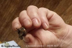 Как избавиться от улиток