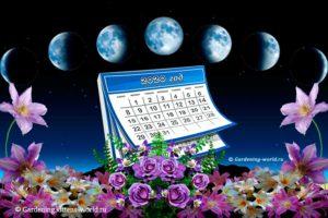 Лунный календарь на 2020 год для садовода и огородника