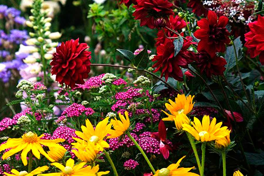 Красно желтый цветник для яркости сада