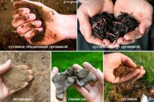 Что надо знать о почве