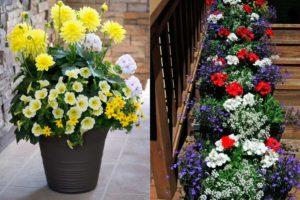 Цветы в контейнерах на даче – советы, фото