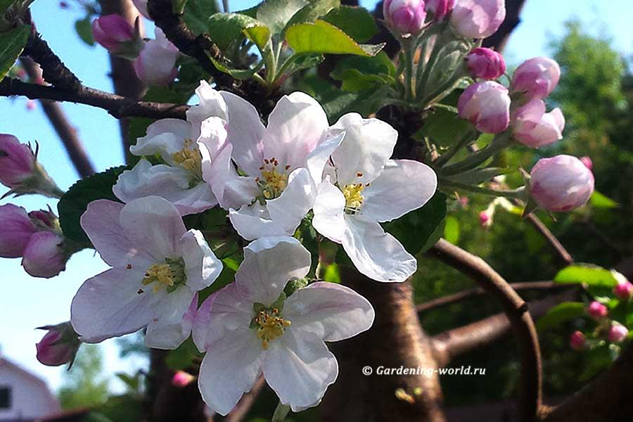 План работ садовода и огородника на май