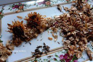 Как собрать семена георгинов однолетних