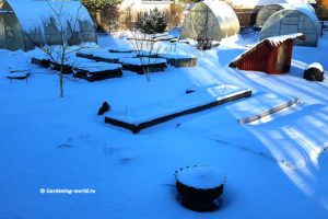 План работ садовода и огородника на февраль