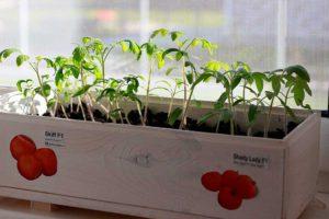 Что пора сажать в феврале, какие цветы и овощи