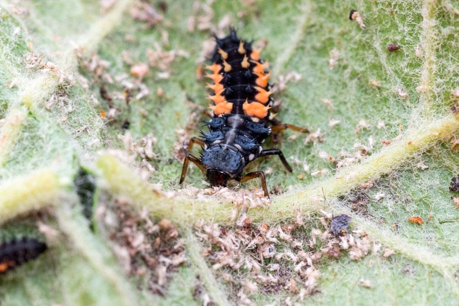 Защита растений от насекомых
