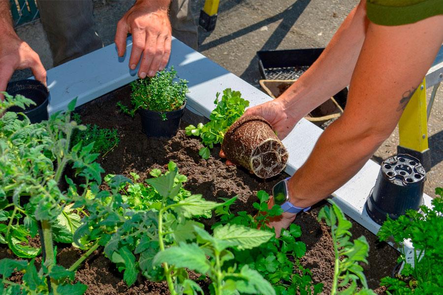 посадки семян на рассаду