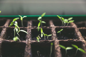 Как правильно сажать томаты и баклажаны на рассаду