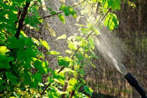 Защита растений БИО препаратами