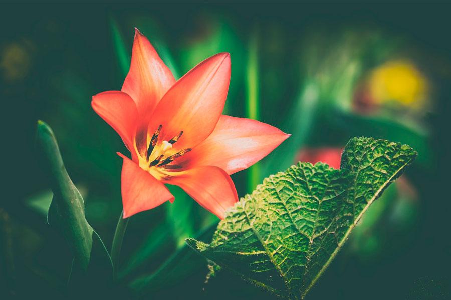 Загущенный цветник