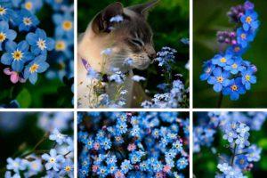 Выращивание незабудки и особенности ухода