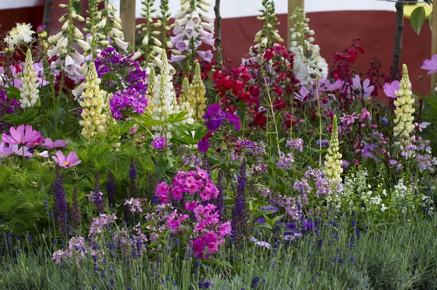Засухоустойчивые многолетники, цветущие летом