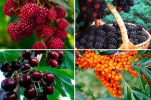 Засухоустойчивые плодово-ягодные деревья и кустарники – краткая характеристика в таблице