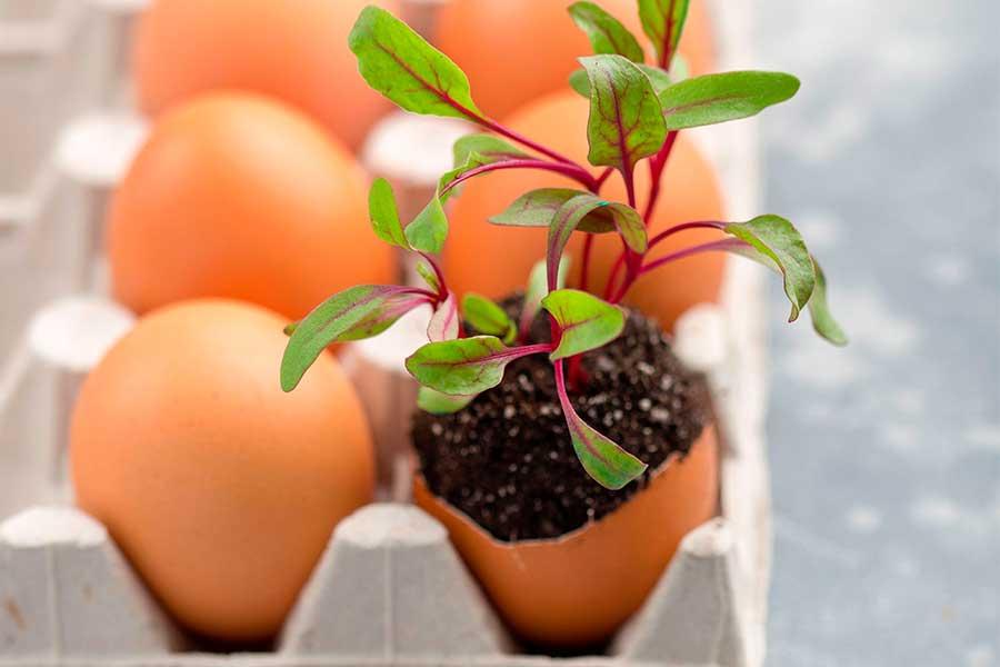 Как подготовить яичную скорлупу. Рассада в скорлупе