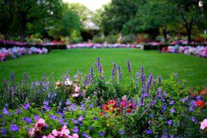 Клумба непрерывного цветения