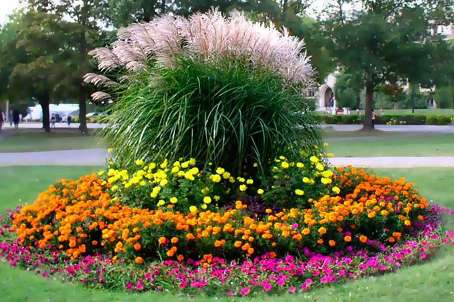 Клумбы на даче оформление и цветы для них