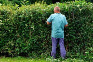 Когда и как обрезать декоративные кустарники