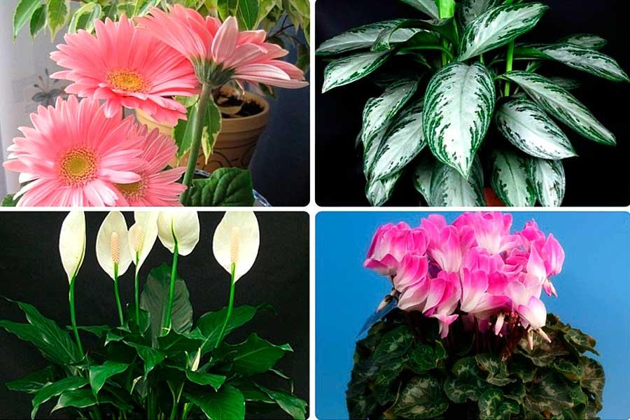 Комнатные растения – фильтры