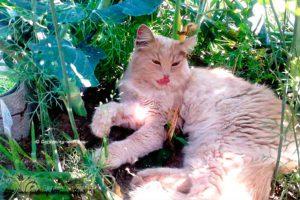 Кошки на даче: как защитить грядки от кошек