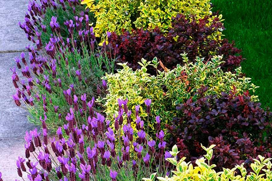 Красивый цветник из трех растений с описанием
