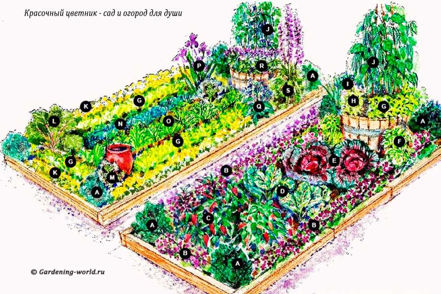 Красочный цветник — план: сад и огород для души и глаз