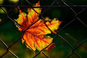 Металлические сетки для опавших листьев