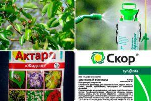 Можно ли смешивать скор и актара для обработки плодовых деревьев и кустов