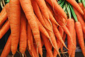 Морковь без проблем, подготовка семян моркови к посеву