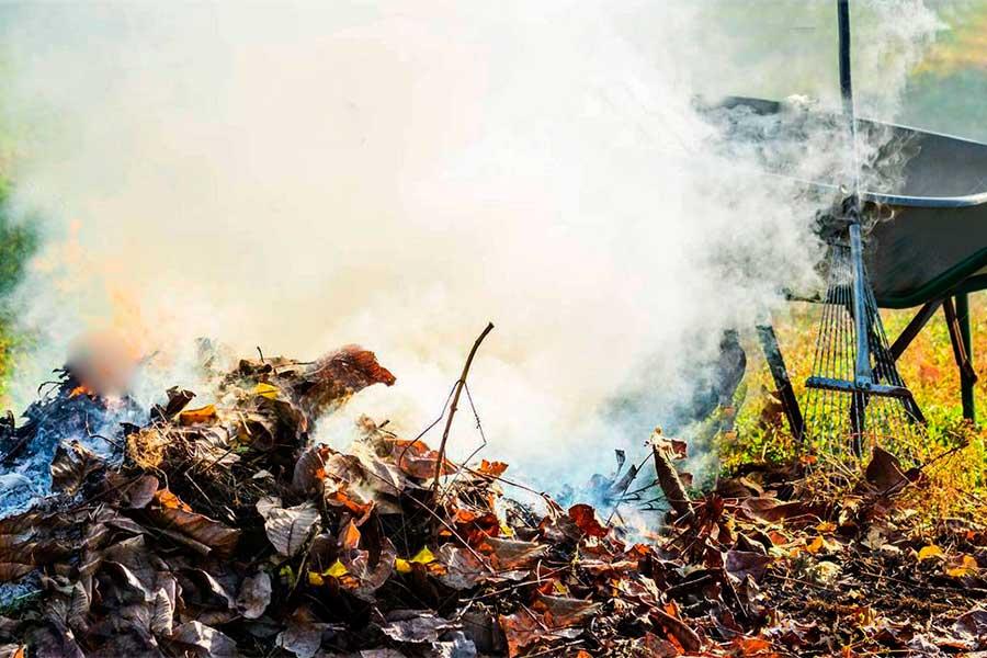 Надо ли сжигать листву осенью