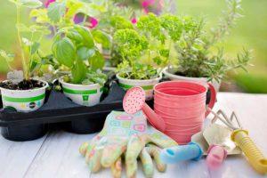 Народные приметы для дачников что и когда сеять и сажать в огороде