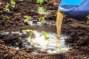 Нормы внесения удобрений и сроки подкормки овощей