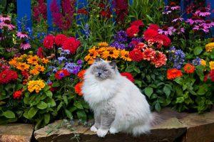 Однолетние и двухлетние цветы в ландшафте вашего сада