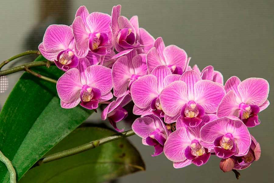 Орхидея отцвела, что делать дальше